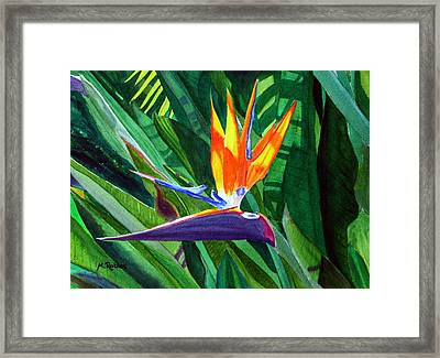 Bird-of-paradise Framed Print by Mike Robles