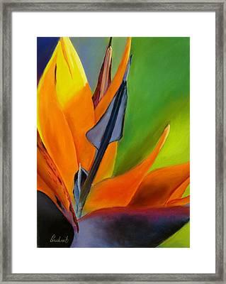 Bird Of Paradise Framed Print by Prashant Shah