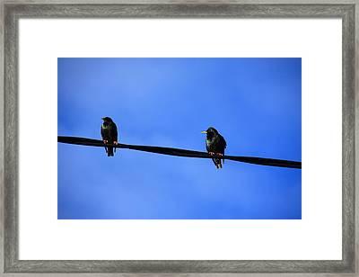 Bird On A Wire Framed Print by Aidan Moran