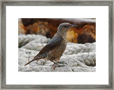 Bird On Deck Framed Print by Jocelyn Kahawai
