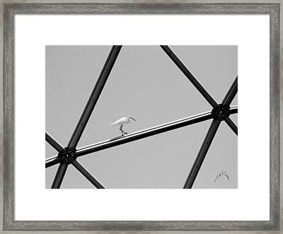 Bird On Structure Framed Print