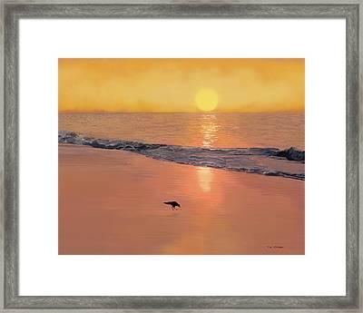 Bird On The Beach Framed Print by Tim Stringer