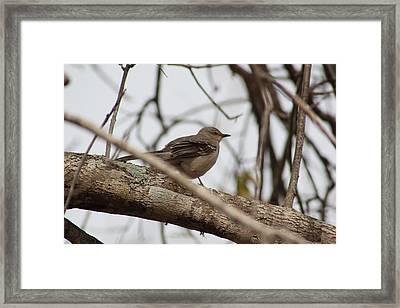 Bird On The Morning Framed Print by Alain roger  Fotso dada