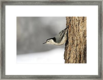 Bird On The Side Of A Tree Framed Print by Richard Wear