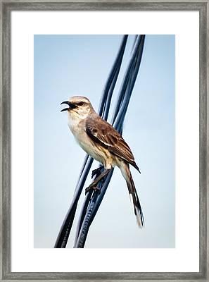 Bird On Wire Framed Print