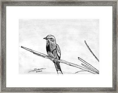 Bird Framed Print by Shashi Kumar