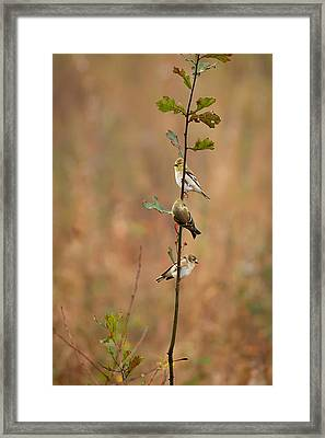 Bird Stack Framed Print by Dan Wells