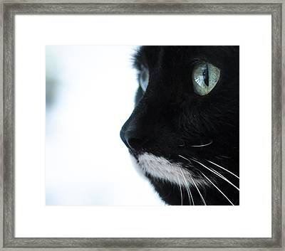 Framed Print featuring the photograph Bird-watching by Ronda Broatch