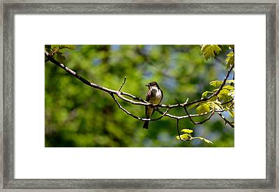 Bird With Worm Framed Print