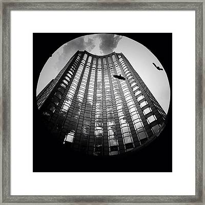 Birds Amongst The Skyscrapers Of New York City Framed Print by Vivienne Gucwa