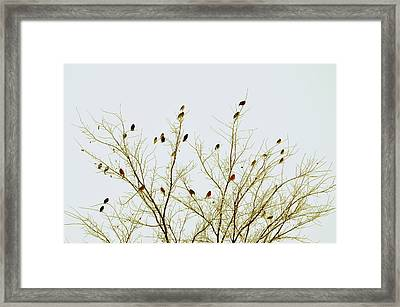 Birds Framed Print by E Murray