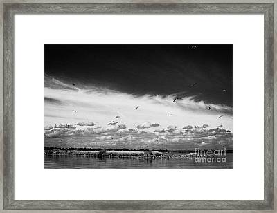 Birds Flying Above Small Roes Island One Of The Many Flat Shallow Areas Of Lough Neagh  Framed Print by Joe Fox