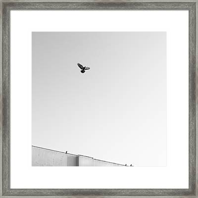 Birds Flying In The Sky Framed Print by Tontygammy + Images