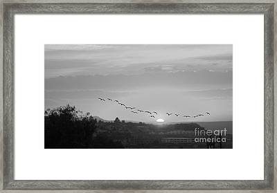 Framed Print featuring the digital art Birds Flying Into The Sunset by John  Kolenberg