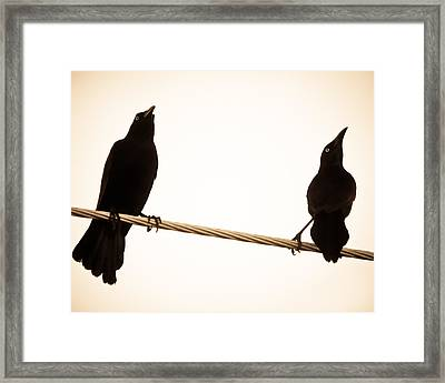 Birds In Black Framed Print
