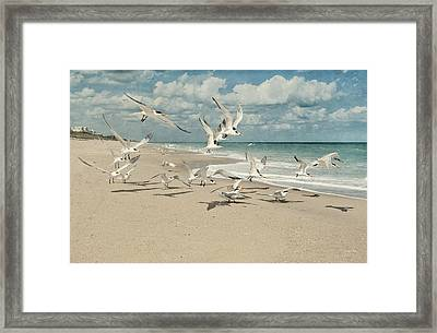 Birds In Flight Framed Print by Cheryl Davis