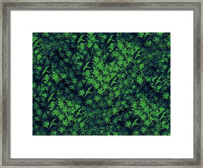 Birds In Green Framed Print by David Dehner