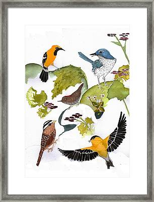 Birds In My Backyard Second In The Series Framed Print