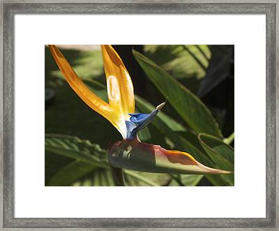 Birds In Paradise Framed Print by Larry Toth