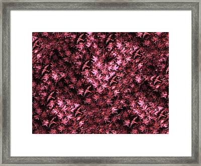 Birds In Redviolet Framed Print by David Dehner
