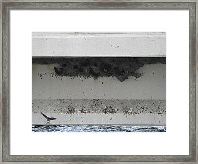 Birds Nest Under The Bridge. Framed Print
