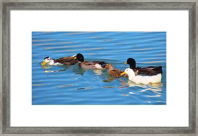 Birds Not Of A Feather Framed Print by Feva  Fotos