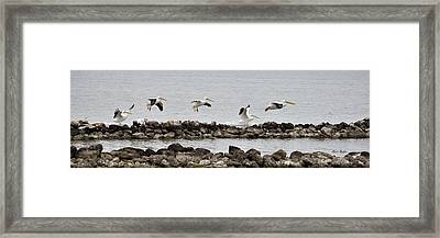 Birds Of A Feather... Framed Print