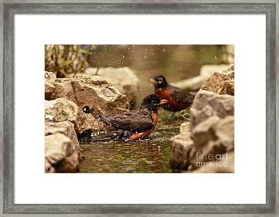 Birds Of A Feather Swim Together Framed Print