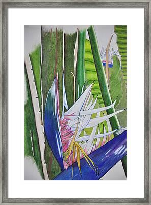 Birds Of Para Dices Framed Print