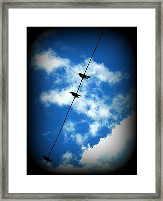 Framed Print featuring the photograph Birds On A Wire by Robin Dickinson