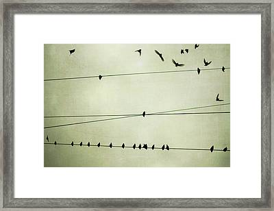 Birds On Telephone Wire Framed Print by Lucy Loomis, Photographer