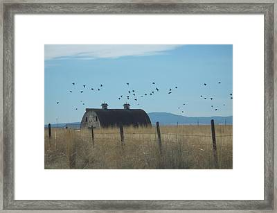 Framed Print featuring the photograph Birds Over Barns by Debbi Saccomanno Chan