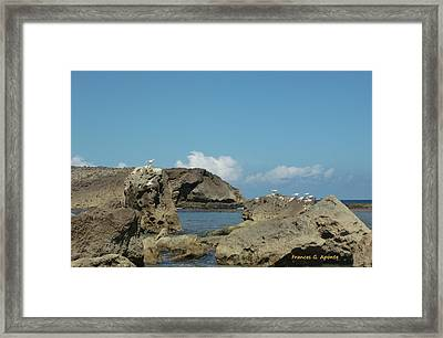 Birds Over The Rock Framed Print by Frances G Aponte