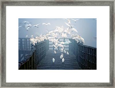Birds Framed Print by Zu Sanchez Photography