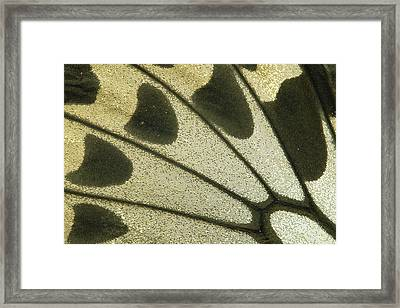 Birdwing Ornithoptera Croesus Butterfly Framed Print by Gerry Ellis