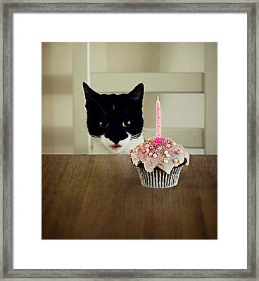 Birthday Cat Framed Print by Elusive Photography