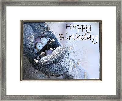 Birthday Donkey Framed Print