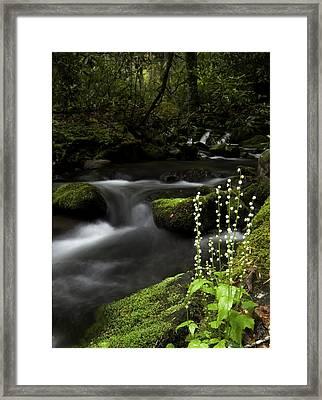 Bishop's Cap On Big Creek Framed Print by Rob Travis