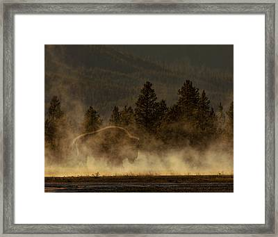 Bison In The Mist Framed Print