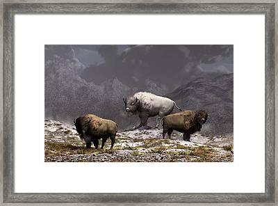 Bison King Framed Print by Daniel Eskridge