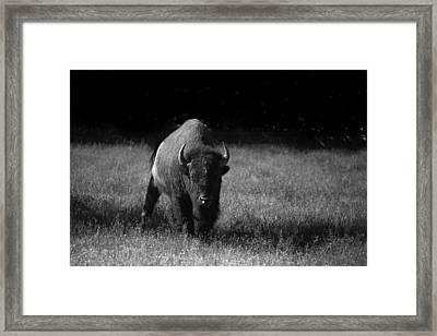 Bison Framed Print by Ralf Kaiser