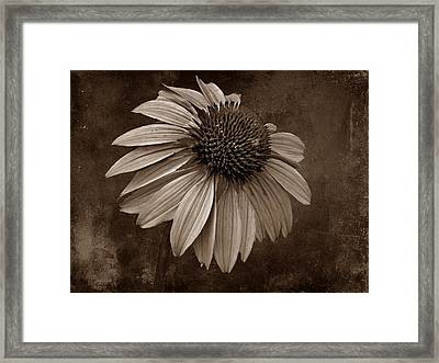 Bittersweet Memories - S Framed Print by David Dehner
