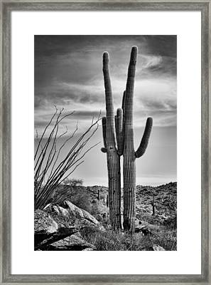 Black And White Couple Framed Print by Kelley King