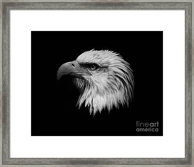 Framed Print featuring the photograph Black And White Eagle by Steve McKinzie