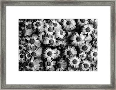 Black And White Flowers Framed Print