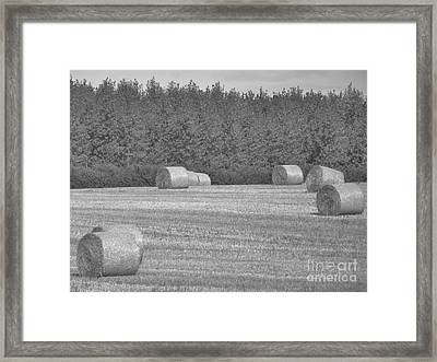 Black And White Hay Bales Framed Print by Andrew May