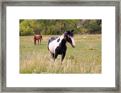 Black And White Horse Framed Print