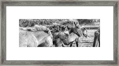 Black And White Image Of Icelandic Framed Print