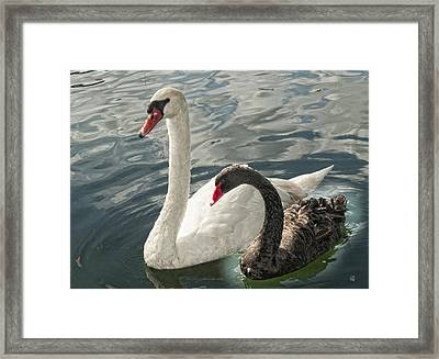 Black And White In Color Framed Print by Barbara Middleton