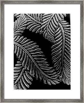 Black And White Leaves Framed Print by Tanya Moody